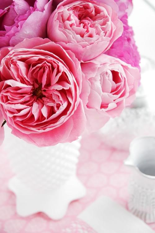 decor8blog.com