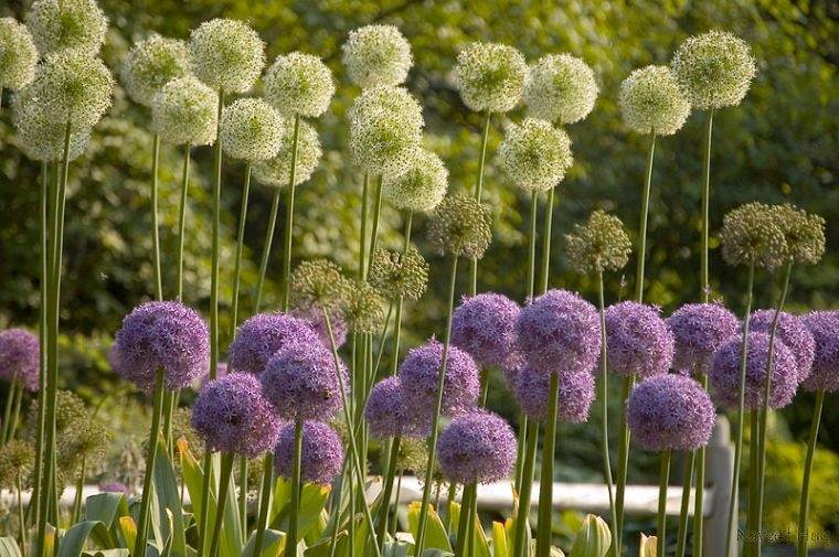 800px-Flowers_at_Brooklyn_Botanical_Garden